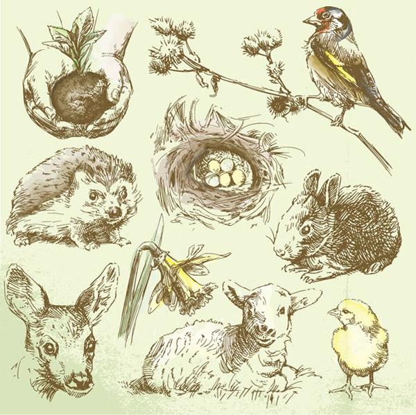 树苗,树枝,鸟,刺猬,鸟巢,兔子,鸡仔儿,绵羊,鹿,野生动物,野生植物