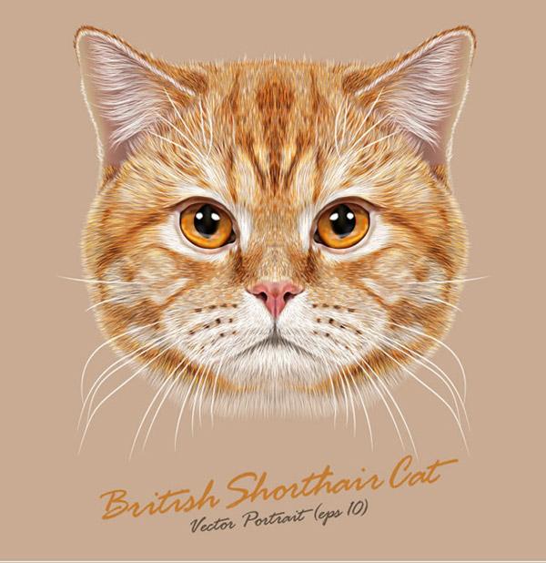 壁纸 动物 猫 猫咪 小猫 桌面 600_618