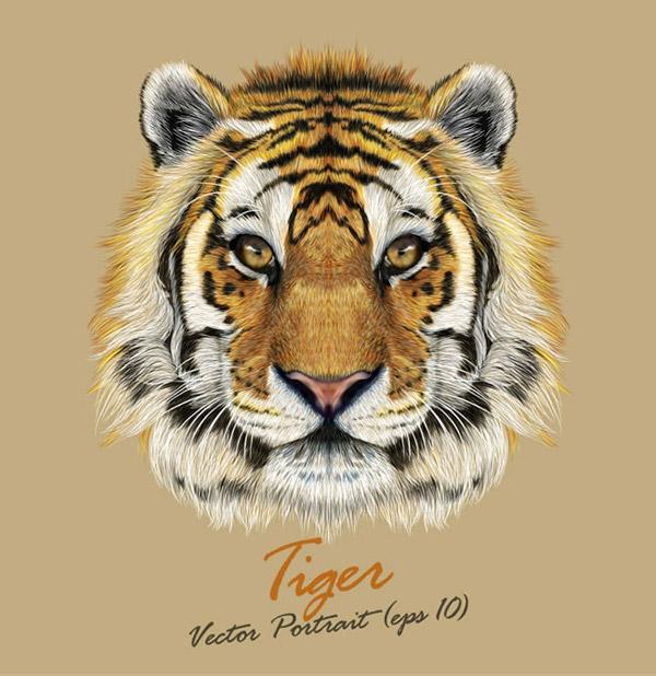 0 点 关键词: 逼真老虎头像矢量素材下载,野生动物,老虎,头像,矢量图