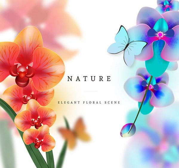 美丽蝴蝶兰和蝴蝶矢量素材下载