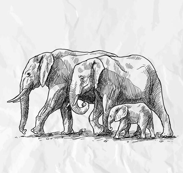 大象木雕素描图片