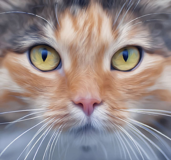 宠物猫头像_素材中国sccnn.com