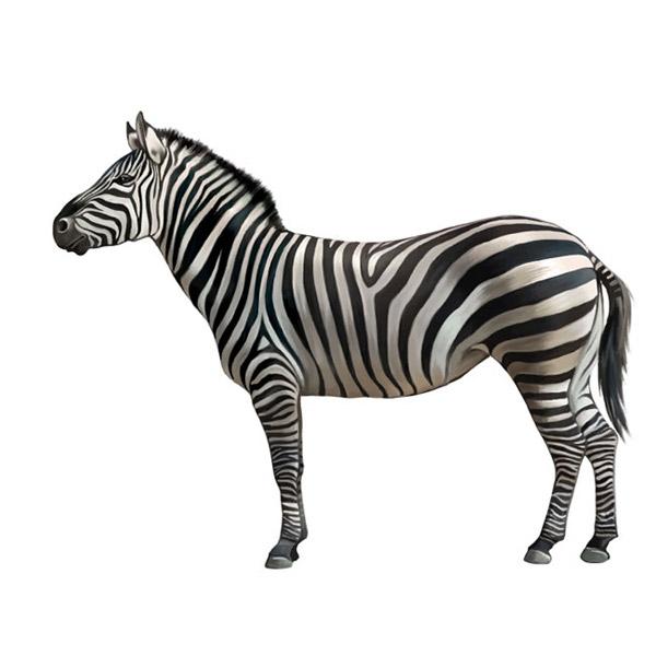 斑马,野生动物,黑白条纹