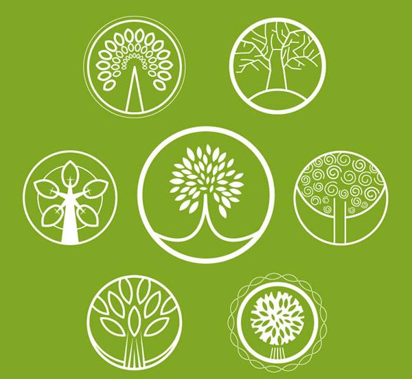双子叶植物茎的次生结构图表