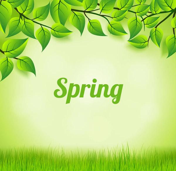 绿色树叶与草地