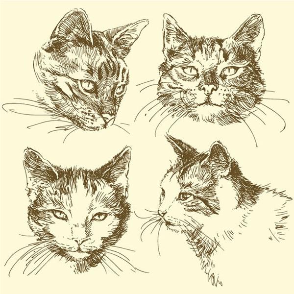 猫头的画法步骤图