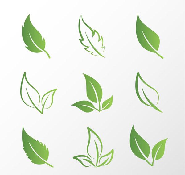 绿叶设计矢量