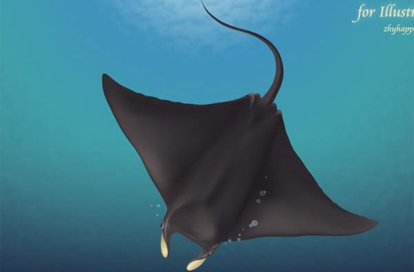 深海鳐鱼矢量