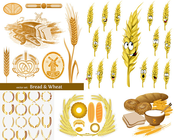 Wheat pictures vector