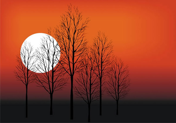 夕阳落日树林风景