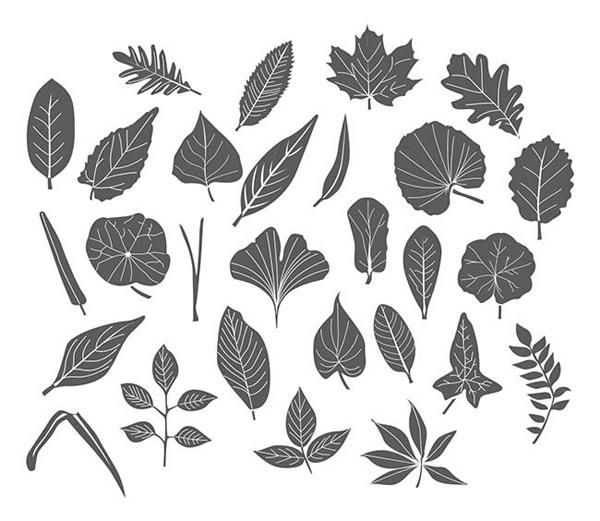 树叶黑白插画手绘