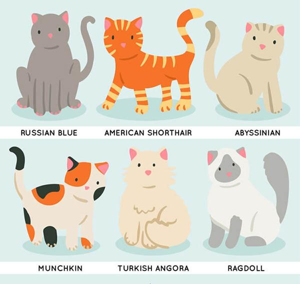 可爱宠物猫_素材中国sccnn.com