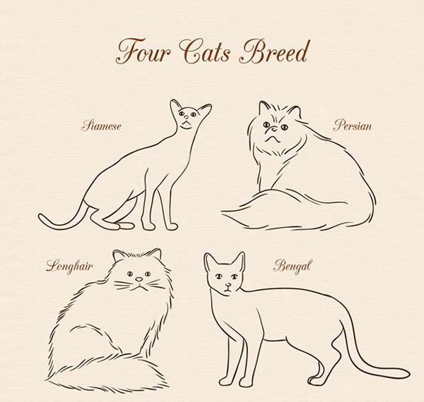 素材分类: 矢量绘画所需点数: 0 点 关键词: 手绘宠物猫咪矢量图下载