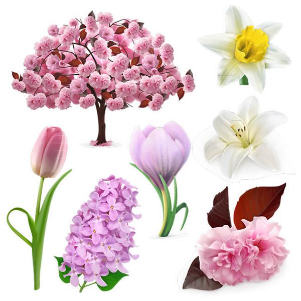 植物,花卉,水仙花,君子兰,郁金香,紫丁香,日本晚樱,百合花,鸡蛋花