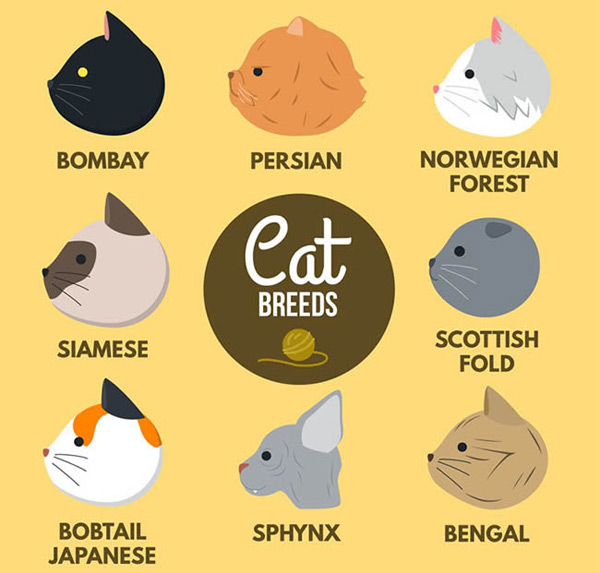 卡通猫侧脸头像矢量图下载,孟买猫,波斯猫,挪威森林猫,猫,头像,侧脸