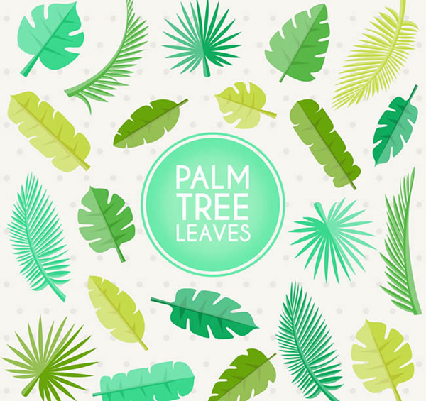 绿色棕榈树叶图片