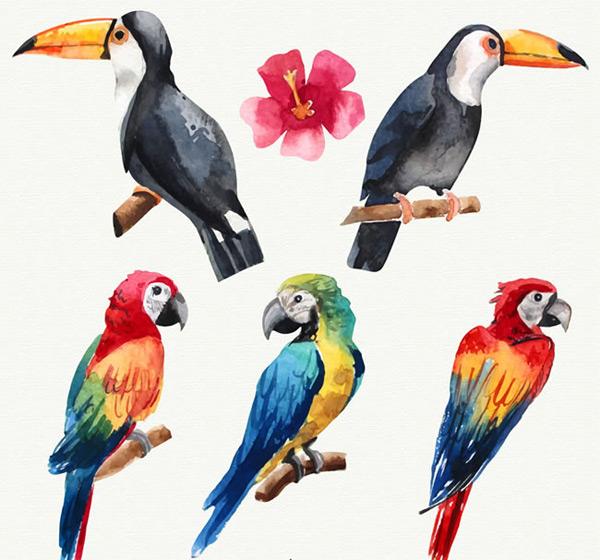扶桑花,大嘴鸟,金刚鹦鹉,树枝,鸟,动物,水彩,彩绘矢量图,矢量图,ai