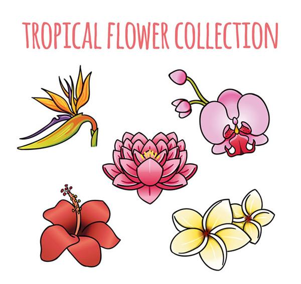热带花卉,卡通花卉,水彩花卉矢量图,花卉矢量图,火炬花,蝴蝶兰,鸡蛋花