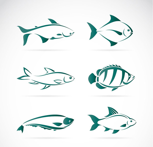 速写钢笔手绘鱼类大全