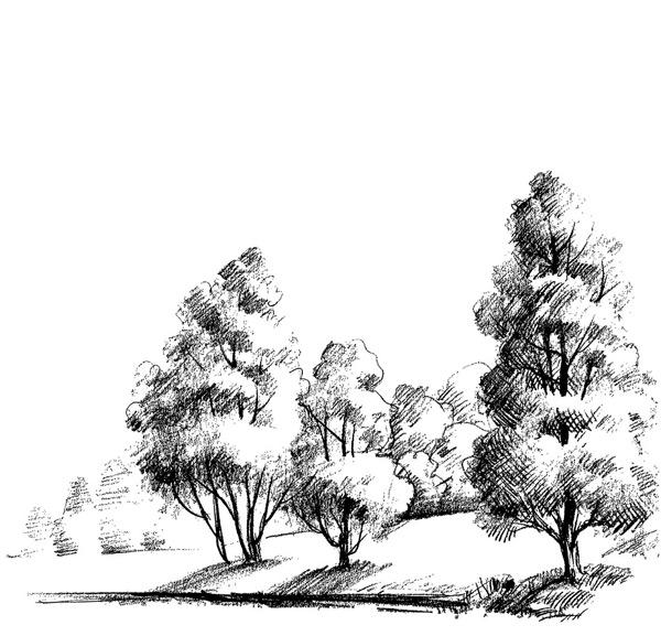 素描手绘线条树木矢量素材,素描,手绘,插画,风景,黑白植物,速写,植物