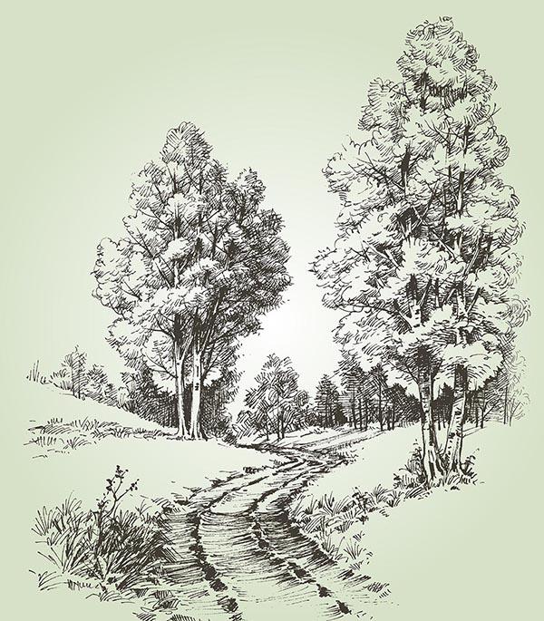 手绘大树简笔画柳