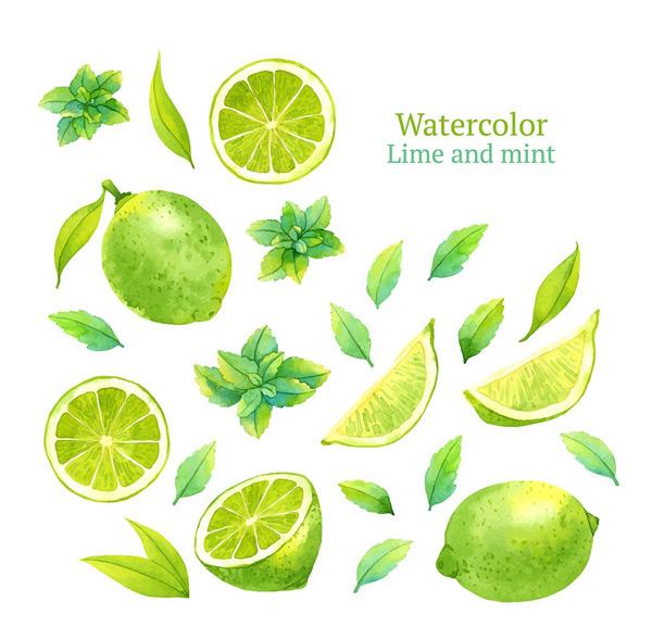 手绘水果,树叶,水果,柠檬,青柠,柠檬片,水彩画,手绘艺术,矢量素材,eps