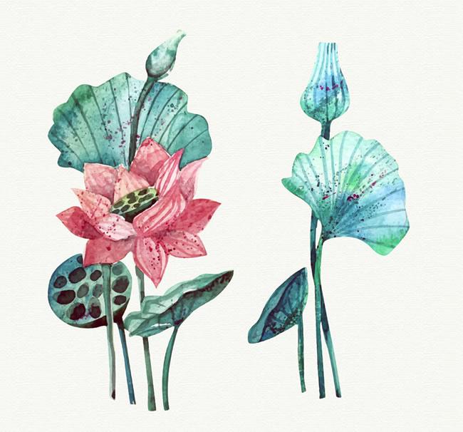 素材分类: 矢量花草树木所需点数: 0 点 关键词: 水彩画荷花和荷叶