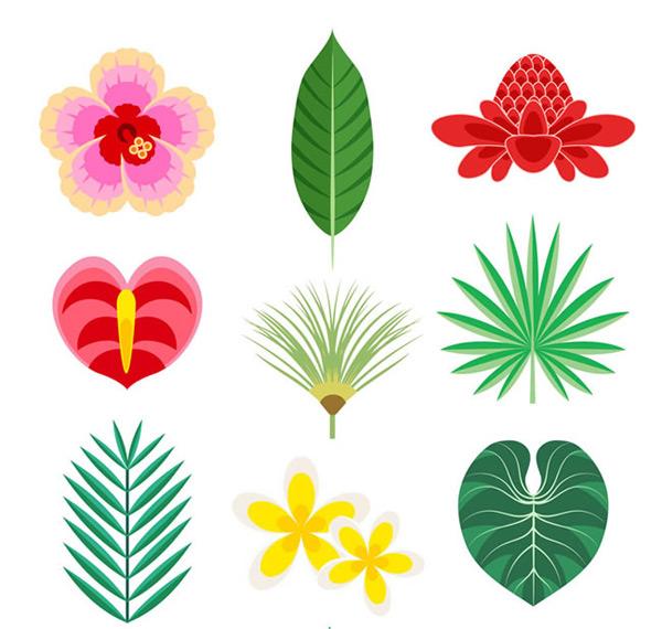 0 点 关键词: 彩色热带花卉和叶子矢量素材,热带花卉,火鹤花,扶桑花