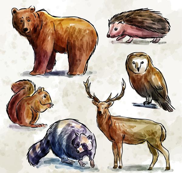 彩绘野生动物矢量素材,熊,刺猬,猫头鹰,松鼠,鹿,浣熊,森林,彩绘,野生