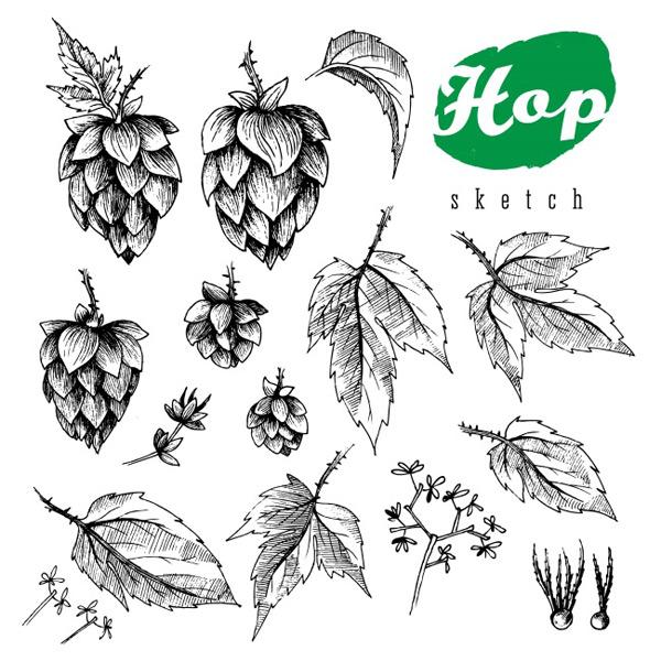 啤酒花装饰植物花环手绘白描黑白线稿,黑白,手绘,树叶,单个,装饰,复古