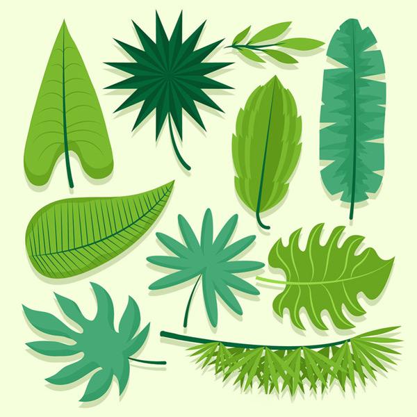 矢量花草树木所需点数: 0 点 关键词: 各种形状绿叶,绿叶,清新,树叶