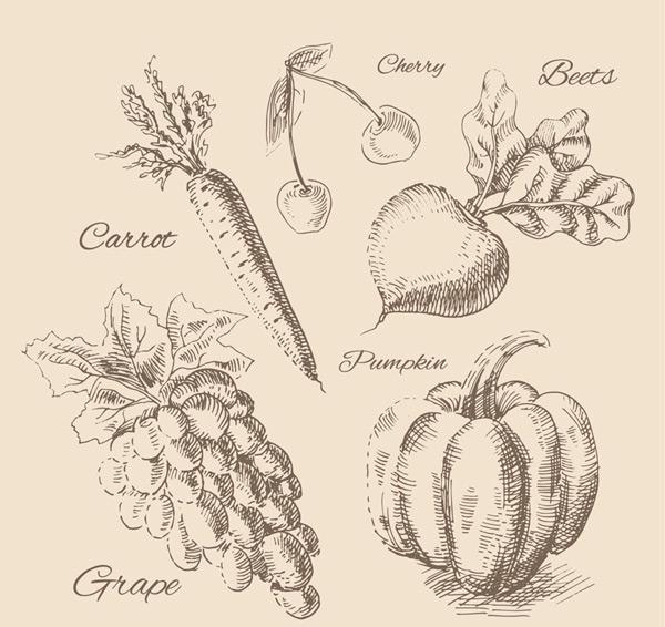 素材分类: 矢量绘画所需点数: 0 点 关键词: 5款逼真手绘水果和蔬菜图片