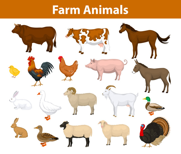 猪,兔,家畜,卡通动物,矢量素材,eps 下载文件特别说明:本站所有资源