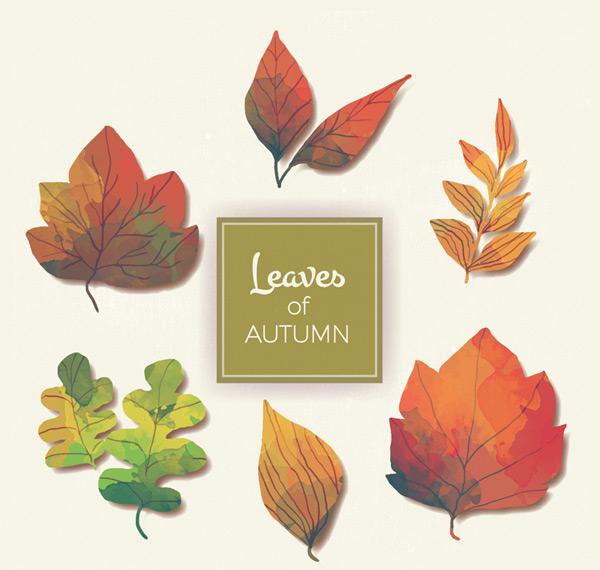彩绘秋季树叶矢量