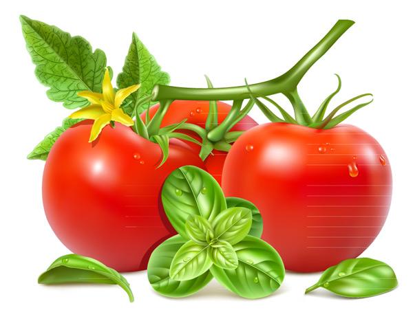 新鲜带花红番茄