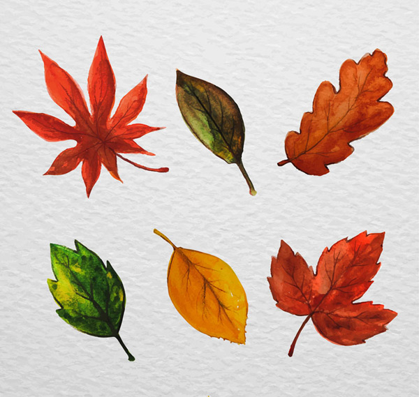 水彩绘叶子设计