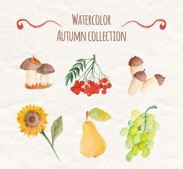 秋季植物与水果