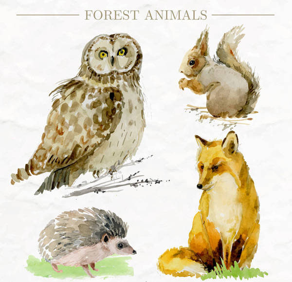 4款生动彩绘森林动物矢量素材,猫头鹰,松鼠,狐狸,刺猬,森林,彩绘