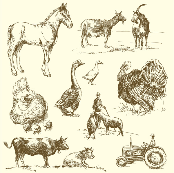 手绘农场动物