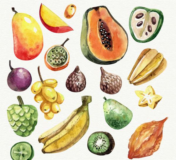 水彩绘水果矢量