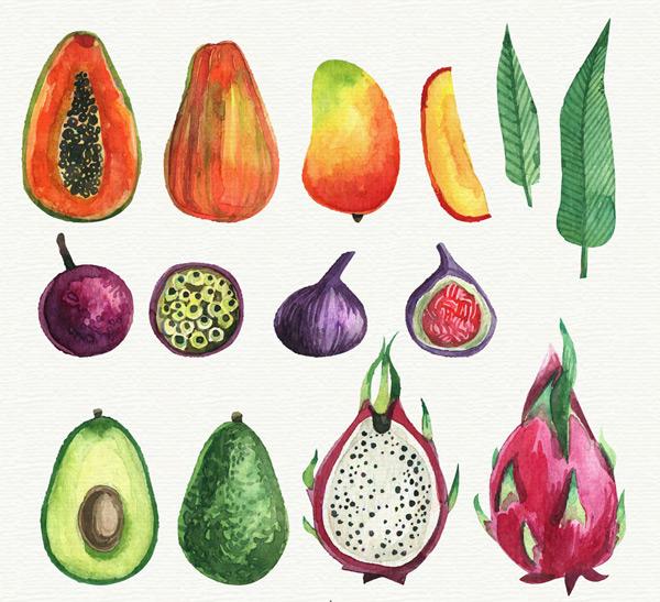 水彩绘水果和切面