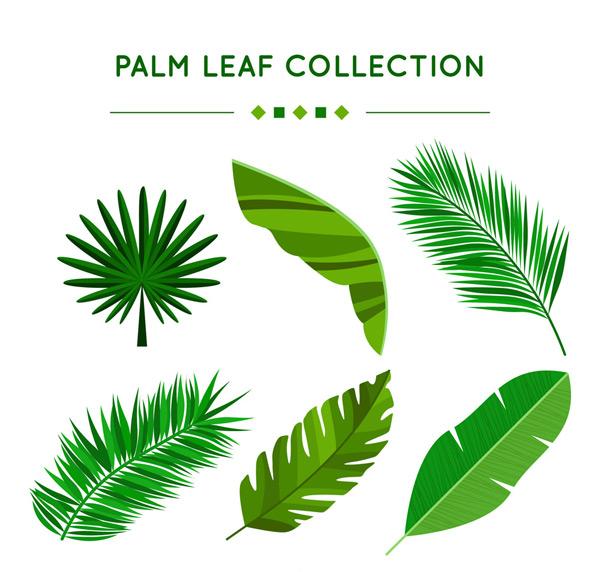 0 点 关键词: 6款绿色棕榈树叶矢量素材,棕榈树,棕榈树叶,矢量图,ai
