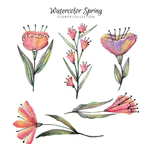 水彩绘春季花卉