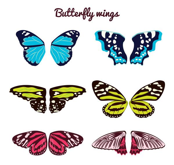 花纹蝴蝶翅膀