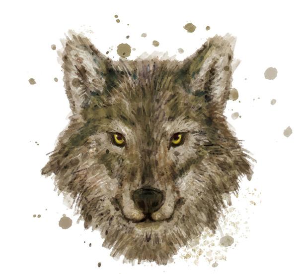 水彩绘狼头像矢量素材,水彩,狼,头像,野生动物,墨迹,矢量图,AI格式