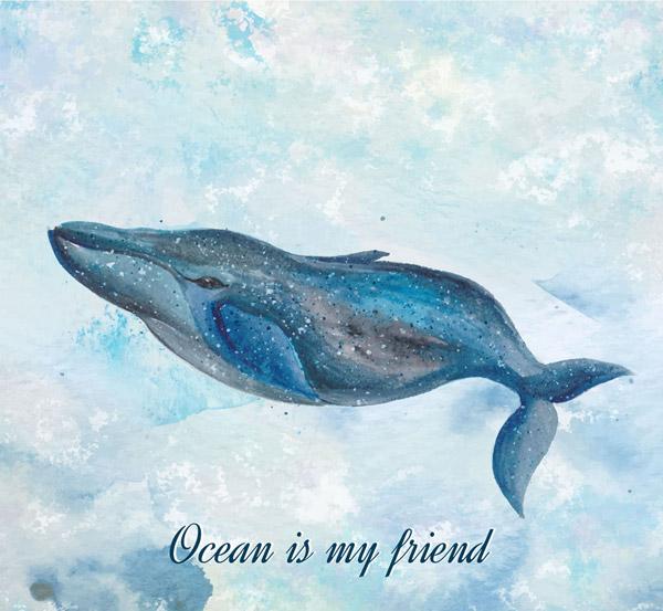 海里的布氏鲸