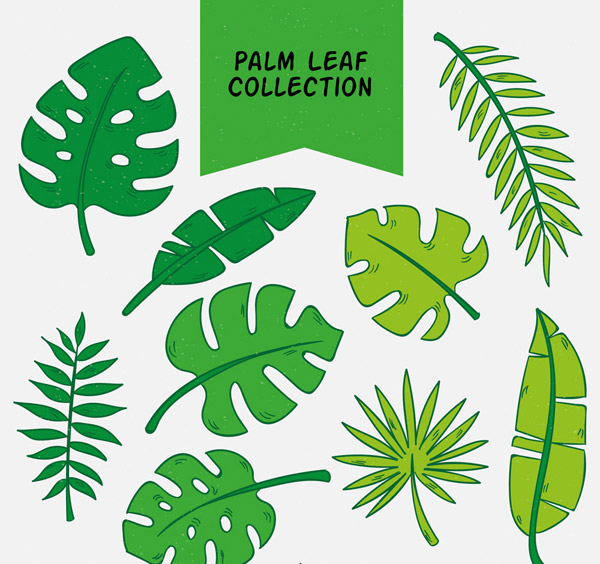 手绘棕榈树叶矢量