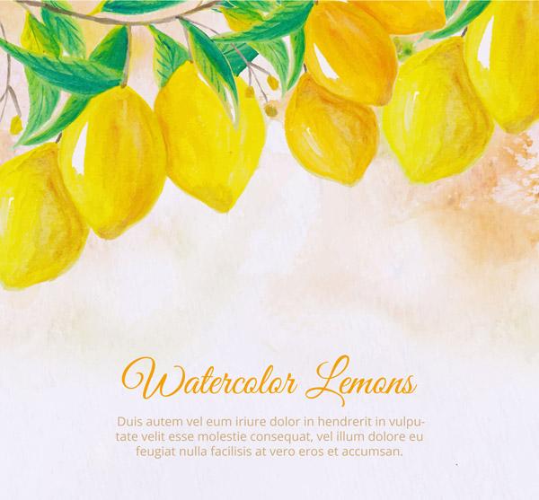 树上的黄色柠檬