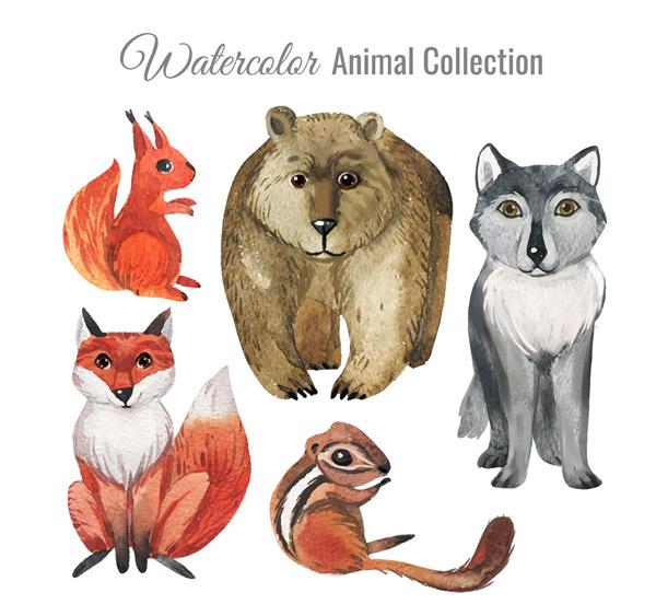 0 点 关键词: 5款水彩绘动物设计矢量素材,松鼠,熊,狼,狐狸,水彩