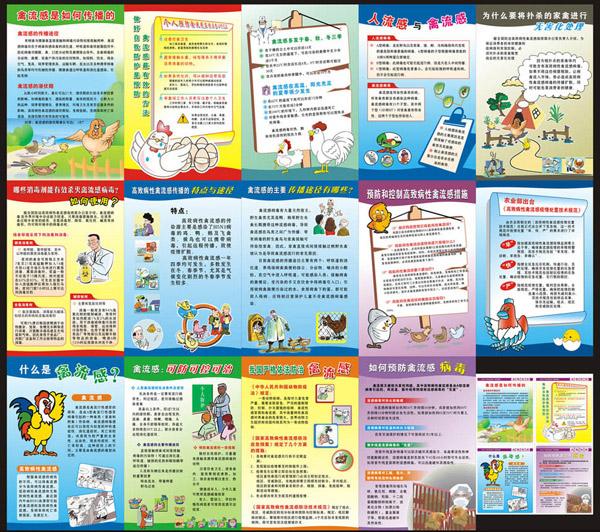 禽流感预防知识